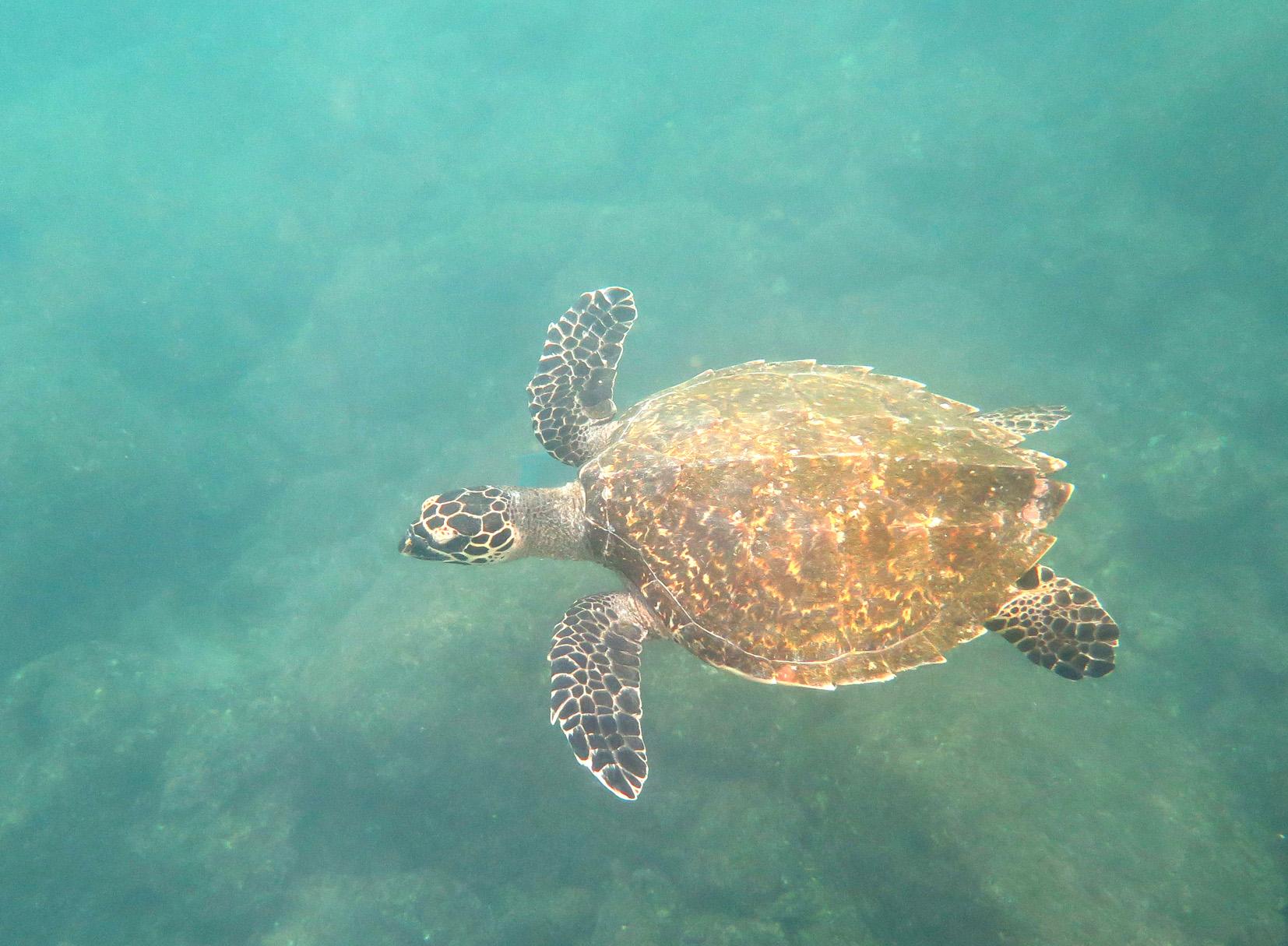 « Galápagos, les îles enchantées »