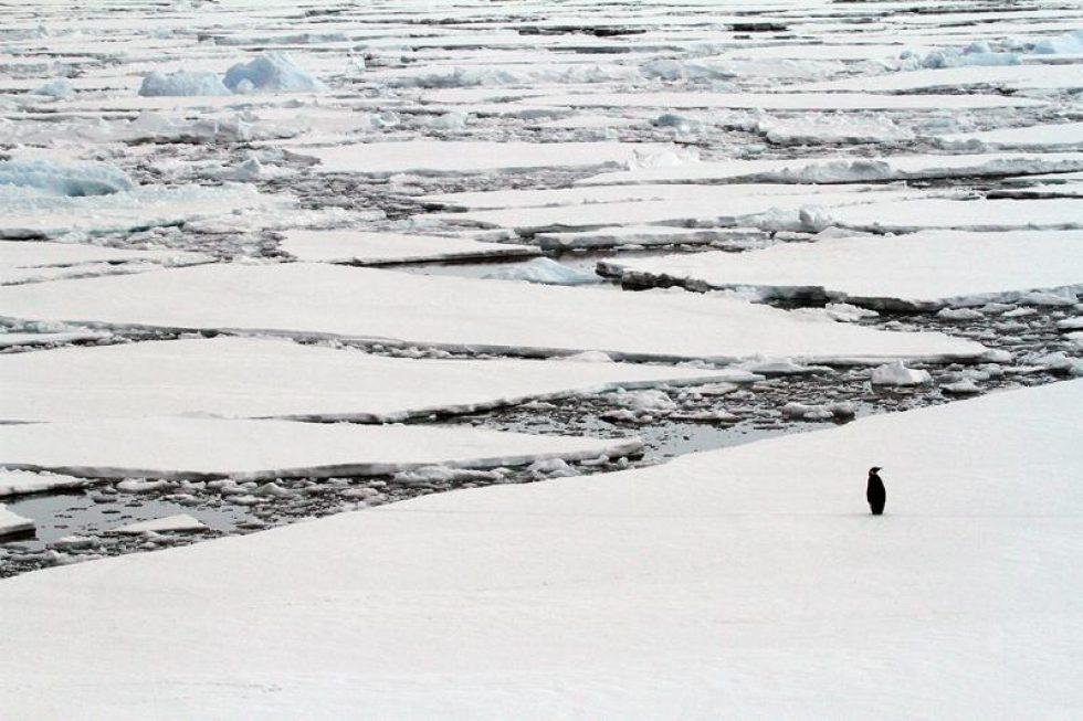 Antarctique du 18 novembre au 3 décembre 2019