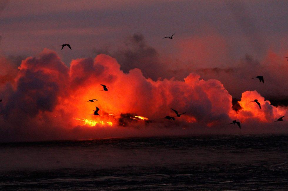 Compte-rendu Galapagos du 14 au 27 juillet 2018